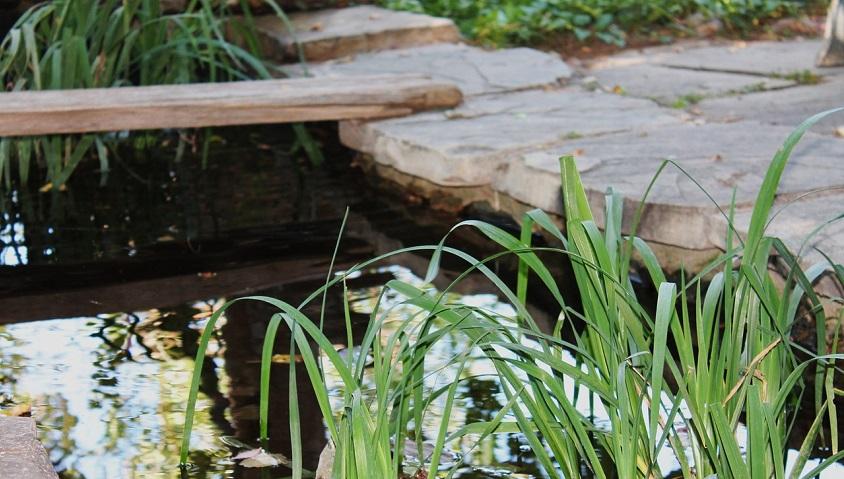 quelle plante mettre piscine naturelle
